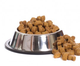 5844035_l-Dog food over flowing from a metal dog bowl