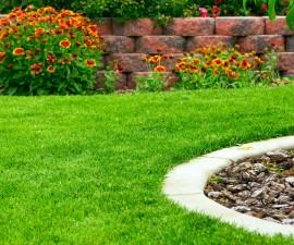 43086990 - garden