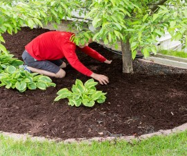 Gardener working in the garden doing the mulching